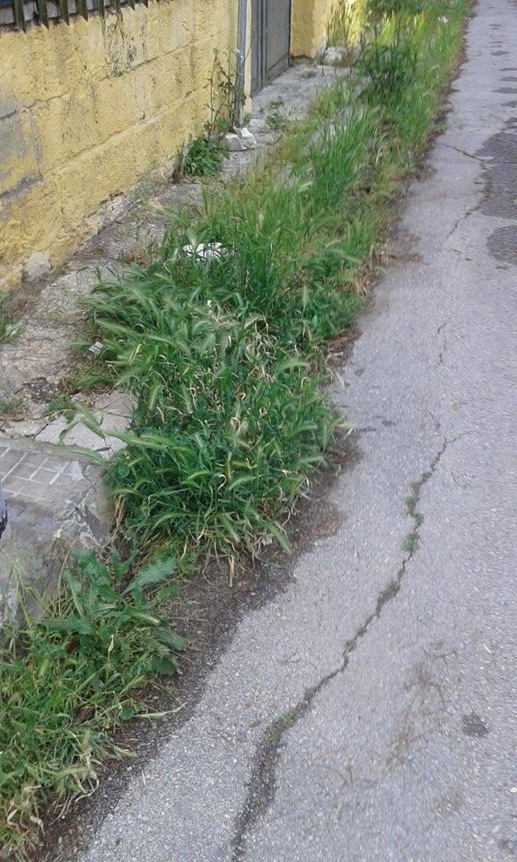 L'erba alta in via Camillo Monaco una settimana fa